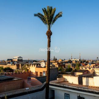Über den Dächern Marrakeschs - Papillu