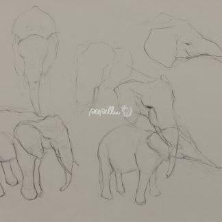 Elefanten - Papillu