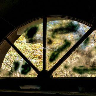 Fenster - Papillu