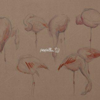 Flamingos - Papillu