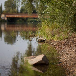 Flussufer - Papillu