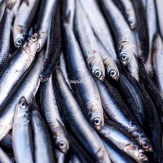 Frischer Fisch 2 – Nerja – Spanien - Papillu