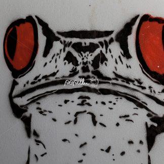 Frosch - Papillu