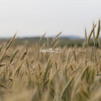 Getreide - Papillu