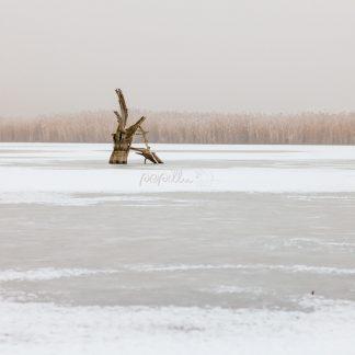 Salziger See - Papillu