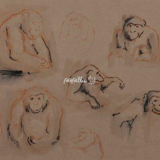 Schimpansen - Papillu