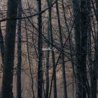 See im Wald - Papillu