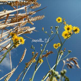 Blüten - Papillu
