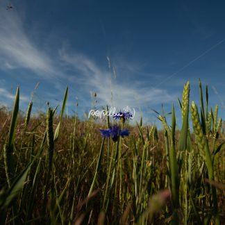 Blüten und Blumen am Wegesrand - Papillu