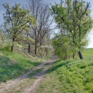 Feldweg - Papillu