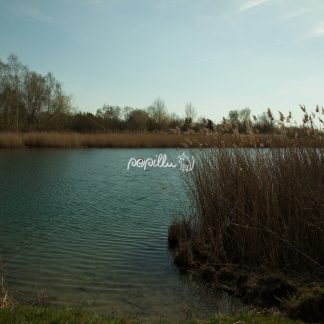 Am Teich - Papillu´ Lampen Design, Grafik und Fotografie