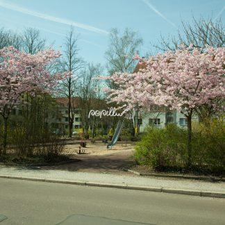 Kirschblüte - Papillu´ Lampen Design, Grafik und Fotografie